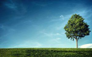 sky an tree